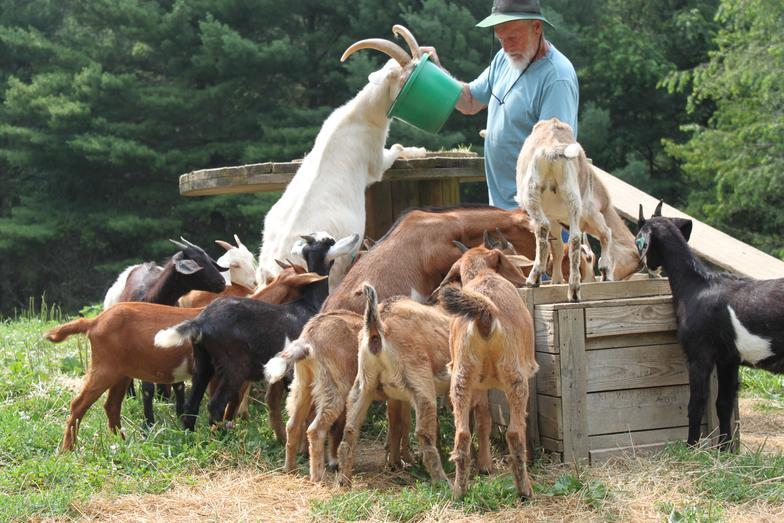 Best Goats to Raise for Profit