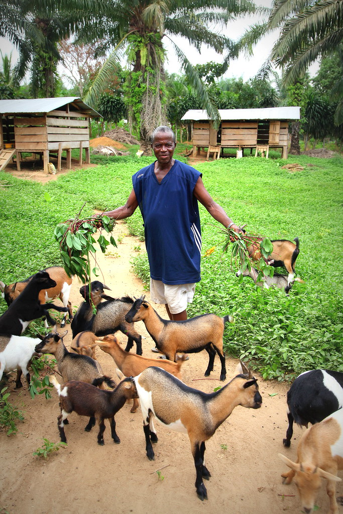 Farming Grants Loans Aid 2020 The Ultimate Guide For Goat Farmers
