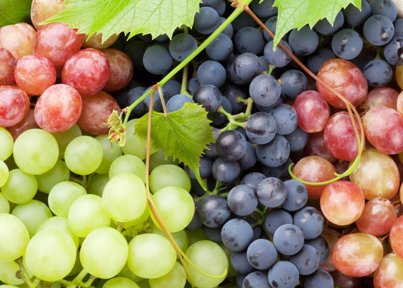 bunches of green, red, and purple grapes