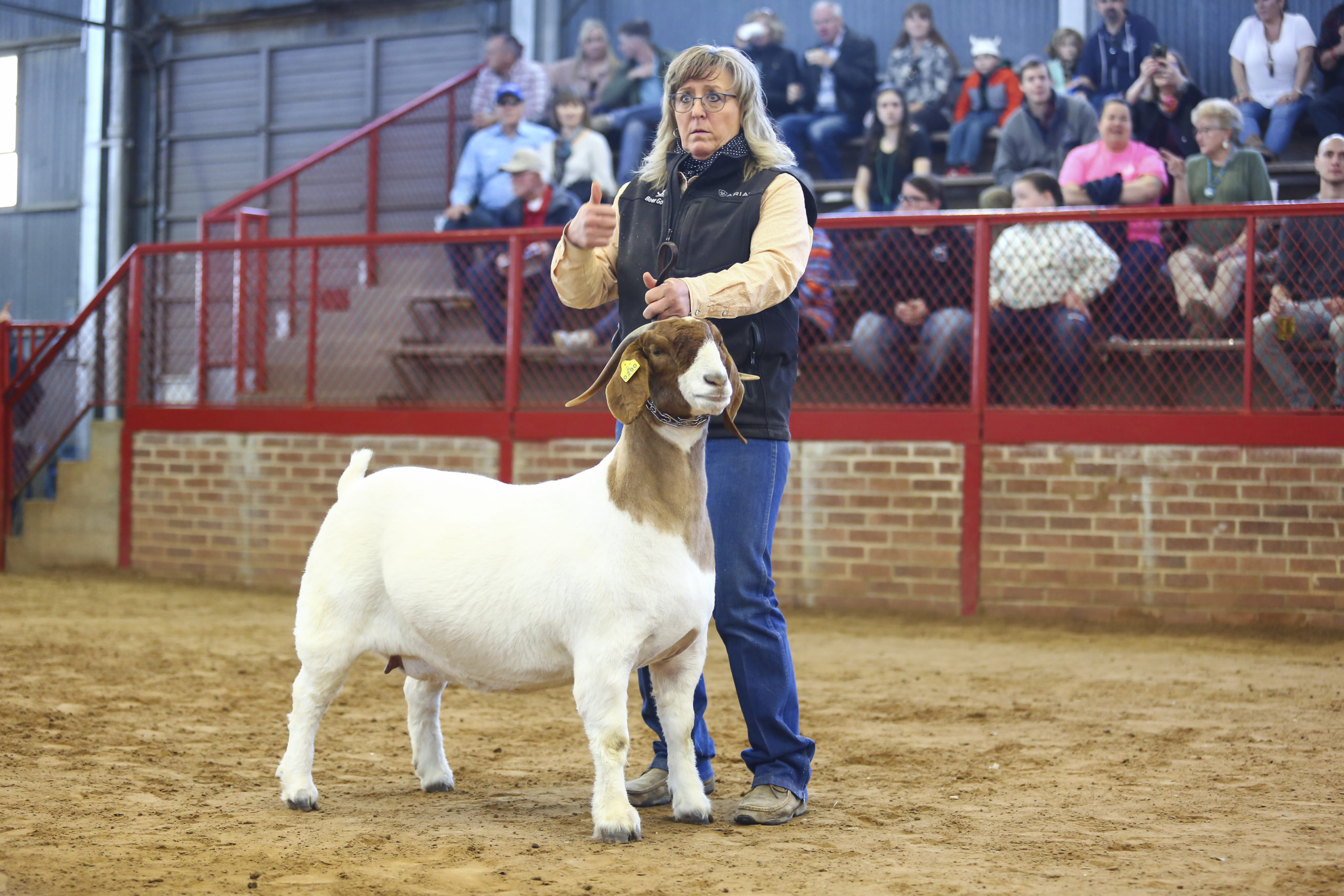 White Boer Goat in the Ring with the Judge