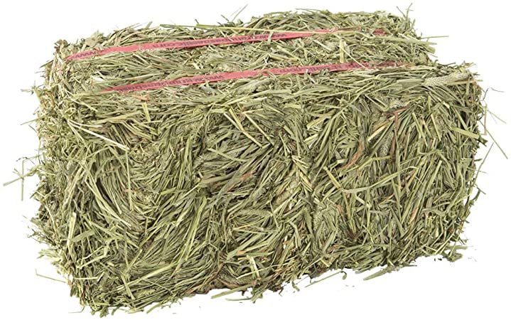 bale of timothy hay